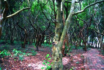 25. Khu rừng Trâm trăm tuổi hút du khách ở Minh Châu1